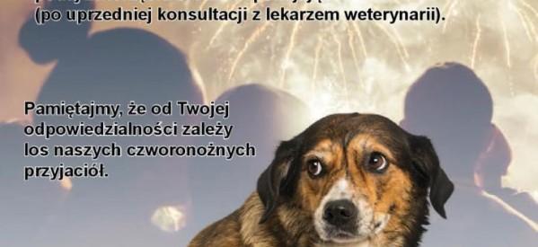 Apel o zabezpieczenie zwierząt domowych w noc sylwestrową