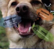 Schronisko dla bezdomnych psów – Podaj łapę w Tatarach
