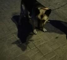 Poszukujemy właściciela psa – aktualizacja